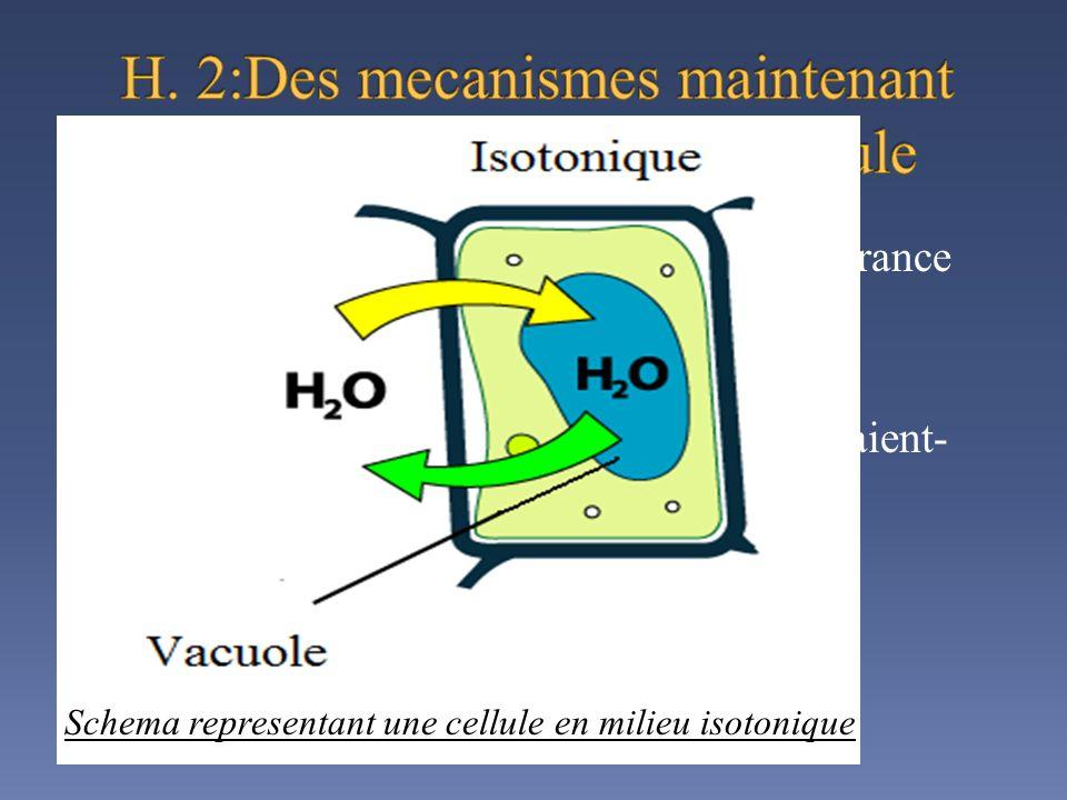 En quoi cette hypothèse justifie lhalotolérance de la salicorne? La salicorne a un gout salé Comment les cellules de salicornes pourraient- elles fair