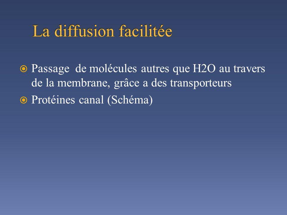Passage de molécules autres que H2O au travers de la membrane, grâce a des transporteurs Protéines canal (Schéma)