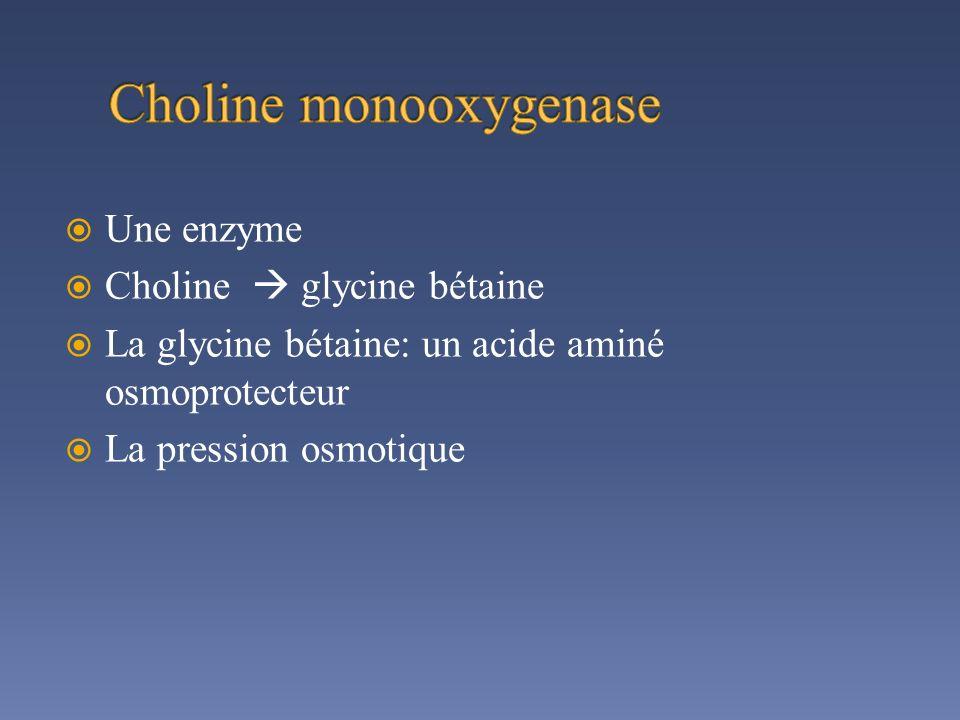 Une enzyme Choline glycine bétaine La glycine bétaine: un acide aminé osmoprotecteur La pression osmotique