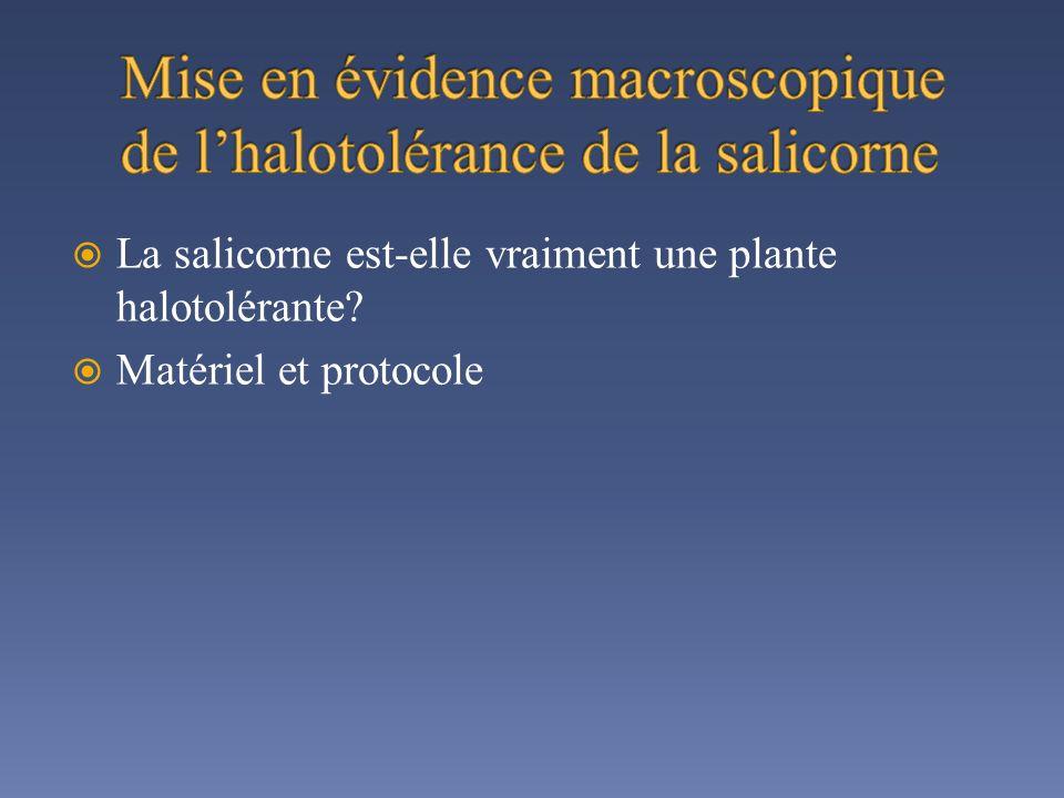 La salicorne est-elle vraiment une plante halotolérante? Matériel et protocole