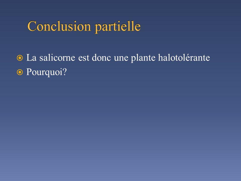 La salicorne est donc une plante halotolérante Pourquoi?