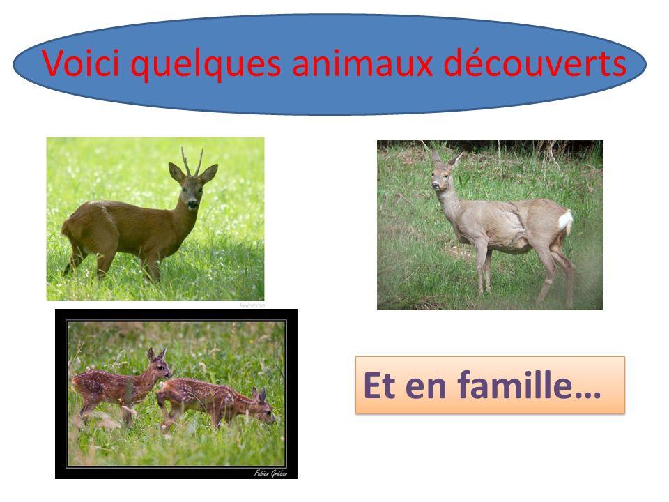 Voici quelques animaux découverts Et en famille…