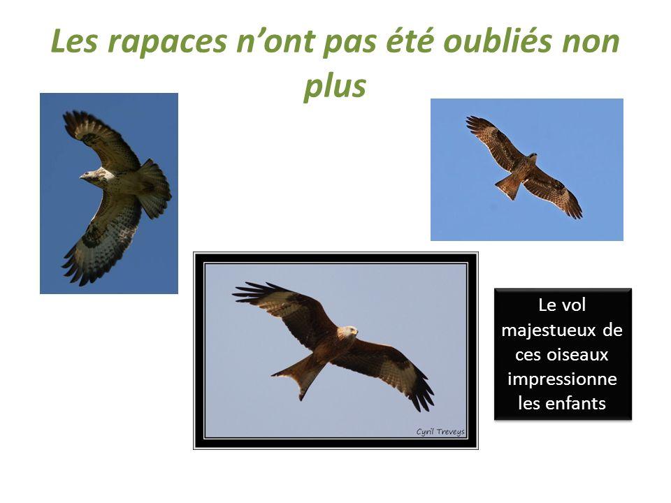 Les rapaces nont pas été oubliés non plus Le vol majestueux de ces oiseaux impressionne les enfants