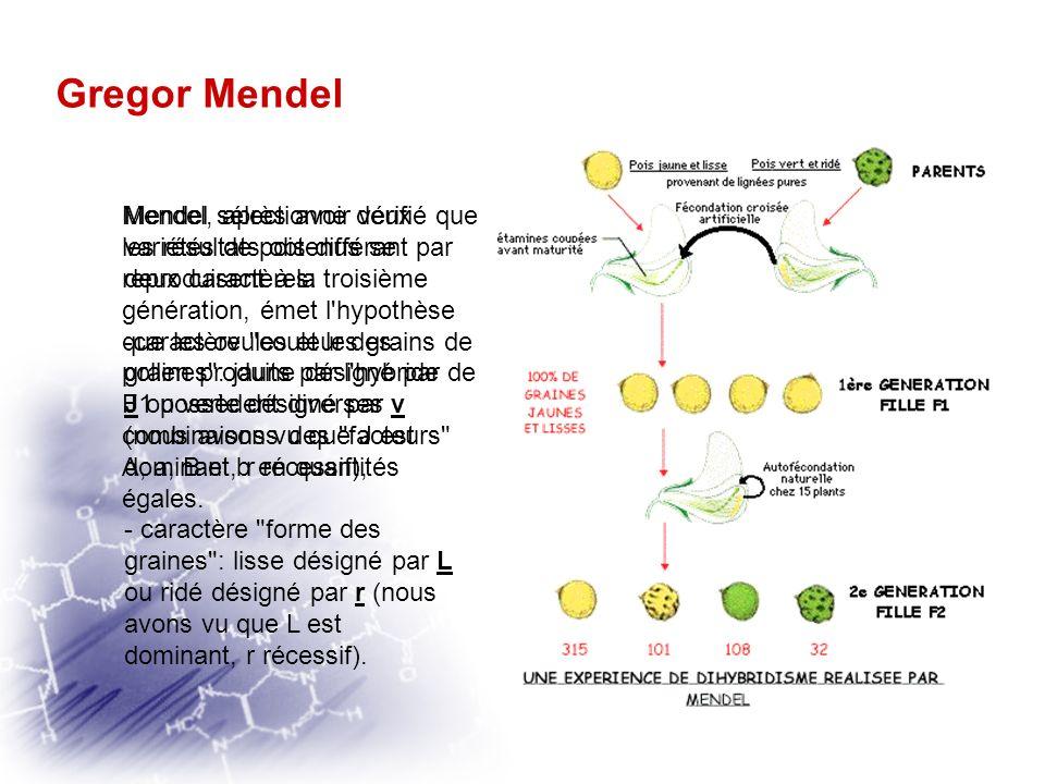 Gregor Mendel Première loi de Mendel: « il y a ségrégation indépendante des versions alternatives d'un caractère lors de la formation des gamètes. »