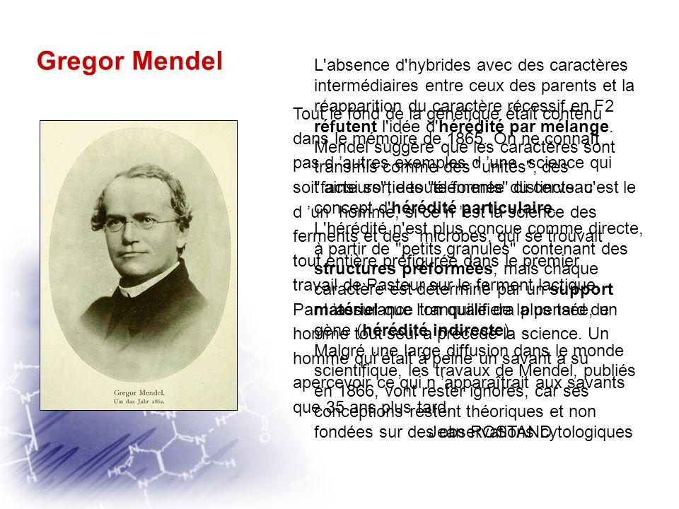 Gregor Mendel « Les descendants des hybrides, chez lesquels sont réunis plusieurs caractères essentiellement différents, représentent les différents t