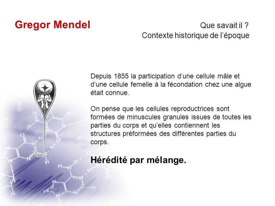 Qui était il ? Que cherchait il ? Que savait il ? Comment a til procédé ? Qua til trouvé ? Gregor Mendel 1822 - 1884