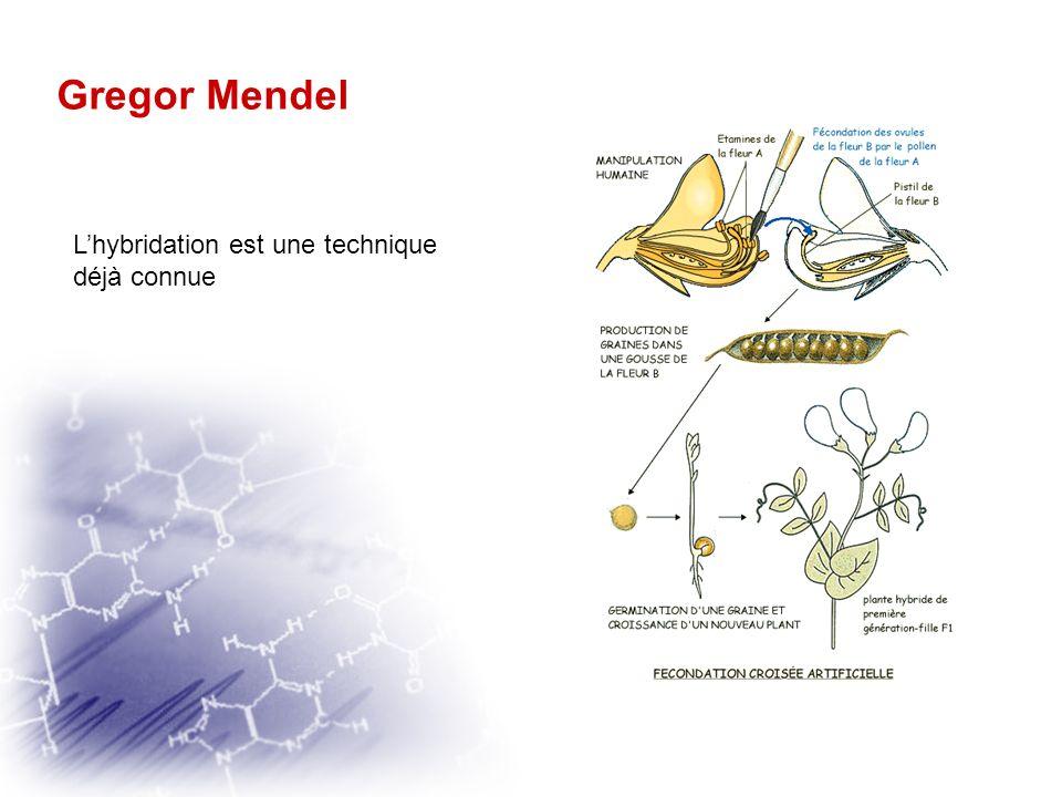 Gregor Mendel Que savait il ? Contexte historique de lépoque Depuis 1855 la participation dune cellule mâle et dune cellule femelle à la fécondation c
