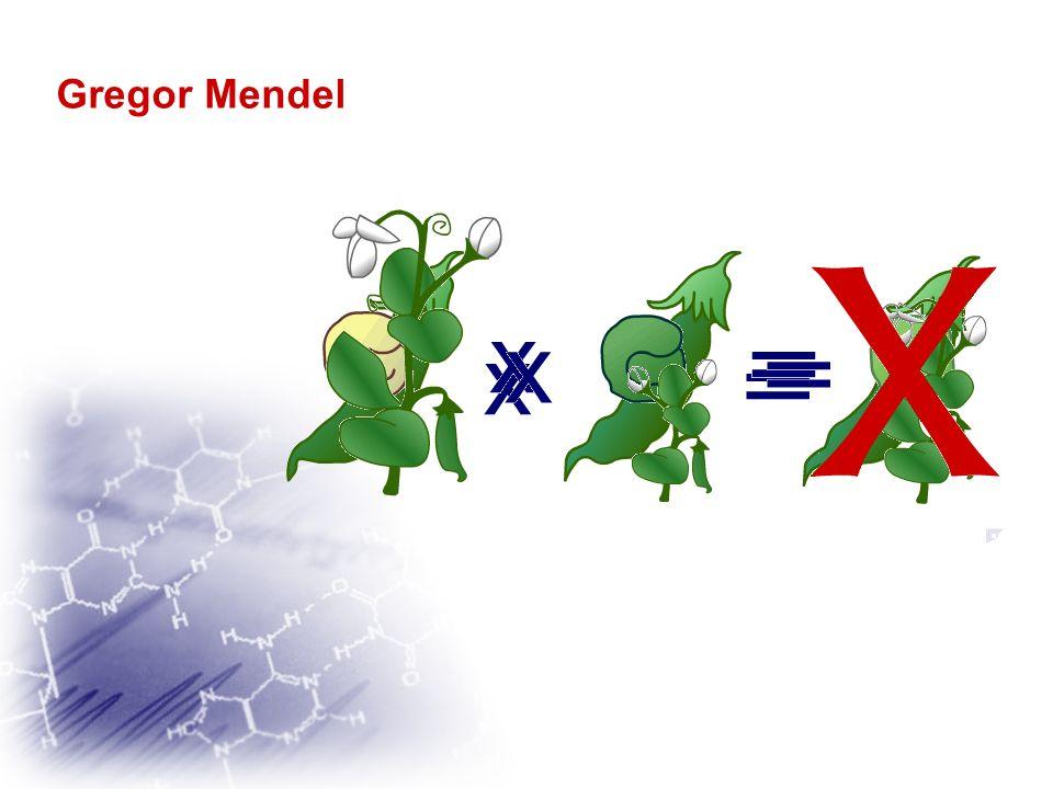 Gregor Mendel La théorie de lhérédité par mélange ne peut être conservé; un des traits disparaît en F1. Issue dun croisement entre un pois à graines l