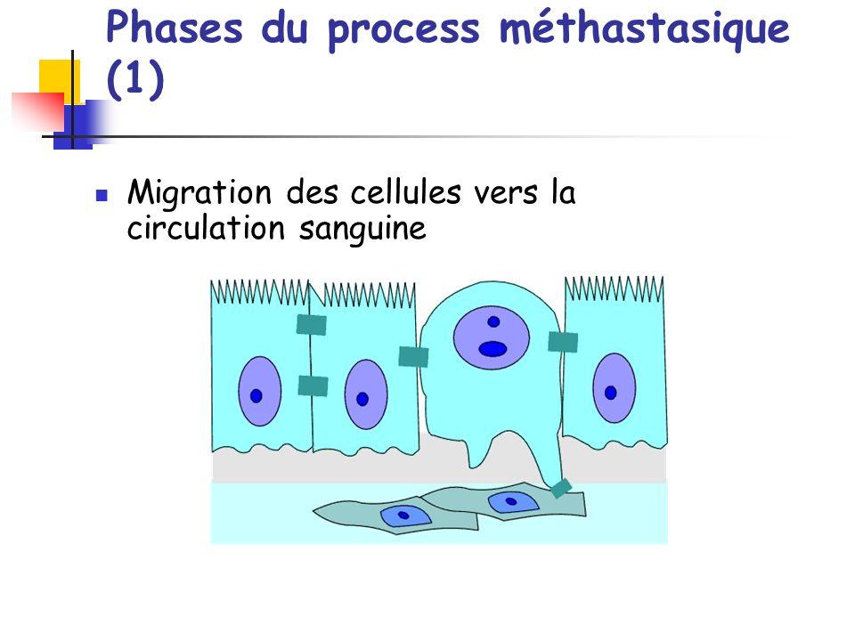 Phases du process méthastasique (1) Migration des cellules vers la circulation sanguine