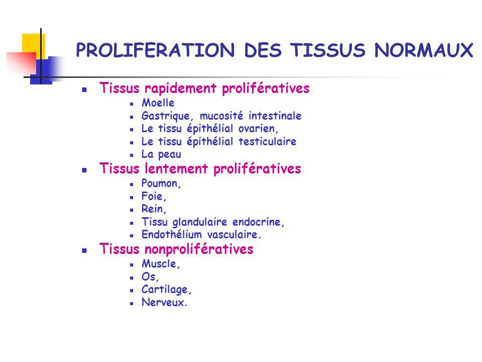 PROLIFERATION DES TISSUS NORMAUX Tissus rapidement prolifératives Moelle Gastrique, mucosité intestinale Le tissu épithélial ovarien, Le tissu épithél