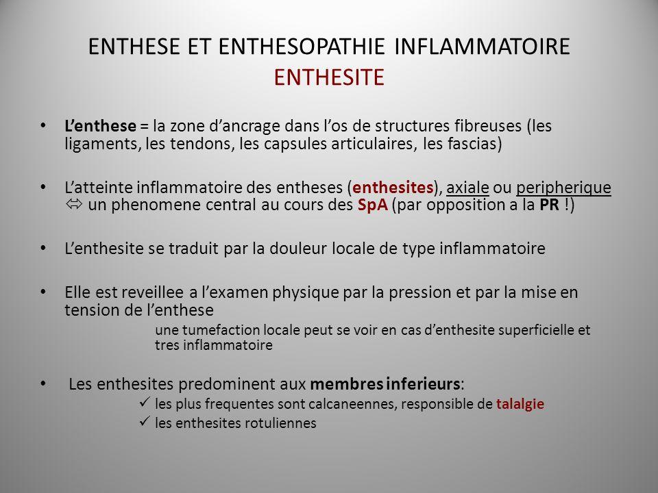 ENTHESE ET ENTHESOPATHIE INFLAMMATOIRE ENTHESITE Lenthese = la zone dancrage dans los de structures fibreuses (les ligaments, les tendons, les capsule