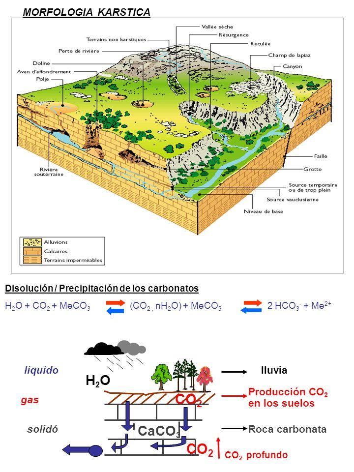 MORFOLOGIA KARSTICA H 2 O + CO 2 + MeCO 3 (CO 2, nH 2 O) + MeCO 3 2 HCO 3 - + Me 2+ Disolución / Precipitación de los carbonatos CaCO 3 H2OH2O Phases
