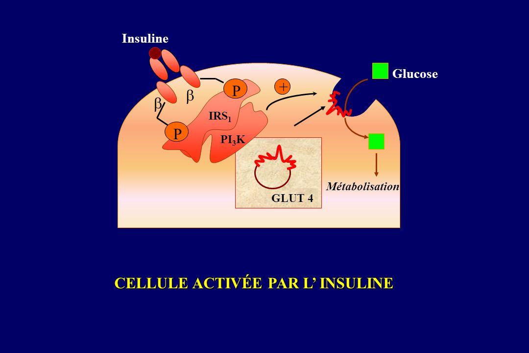 CELLULE ACTIVÉE PAR L INSULINE + GLUT 4 Glucose Insuline Métabolisation P P PI 3 K IRS 1