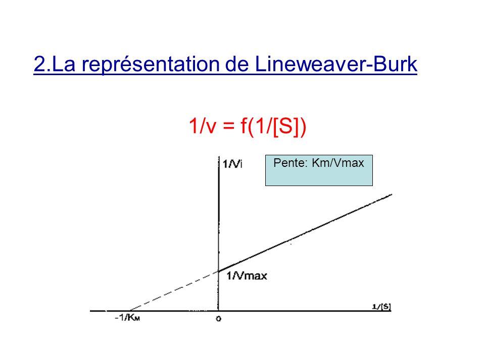2.La représentation de Lineweaver-Burk 1/v = f(1/[S]) Pente: Km/Vmax