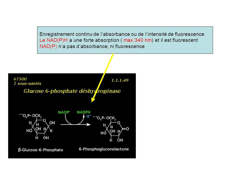 Enregistrement continu de labsorbance ou de lintensité de fluorescence Le NAD(P)H a une forte absorption ( max 340 nm) et il est fluorescent NAD(P) na