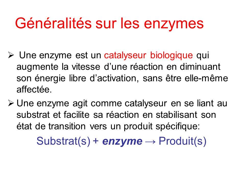 Généralités sur les enzymes Une enzyme est un catalyseur biologique qui augmente la vitesse dune réaction en diminuant son énergie libre dactivation,