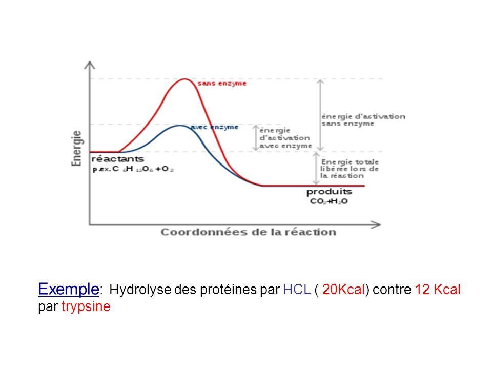 Exemple : Hydrolyse des protéines par HCL ( 20Kcal) contre 12 Kcal par trypsine