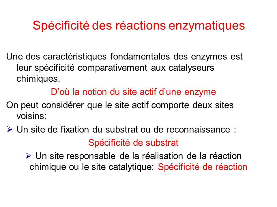 Spécificité des réactions enzymatiques Une des caractéristiques fondamentales des enzymes est leur spécificité comparativement aux catalyseurs chimiqu