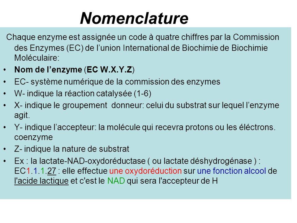 Nomenclature Chaque enzyme est assignée un code à quatre chiffres par la Commission des Enzymes (EC) de lunion International de Biochimie de Biochimie