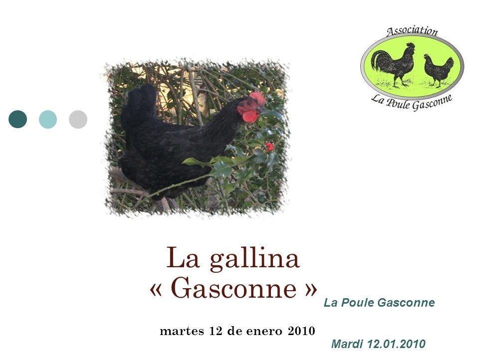 martes 12 de enero 2010 La gallina « Gasconne » La Poule Gasconne Mardi 12.01.2010