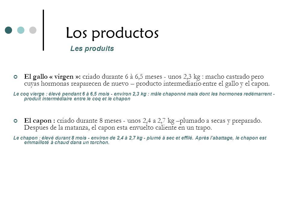 Los productos El gallo « virgen »: criado durante 6 à 6,5 meses - unos 2,3 kg : macho castrado pero cuyas hormonas reaparecen de nuevo – producto inte