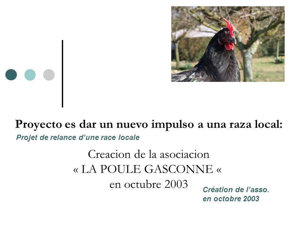 Proyecto es dar un nuevo impulso a una raza local: Creacion de la asociacion « LA POULE GASCONNE « en octubre 2003 Création de lasso. en octobre 2003