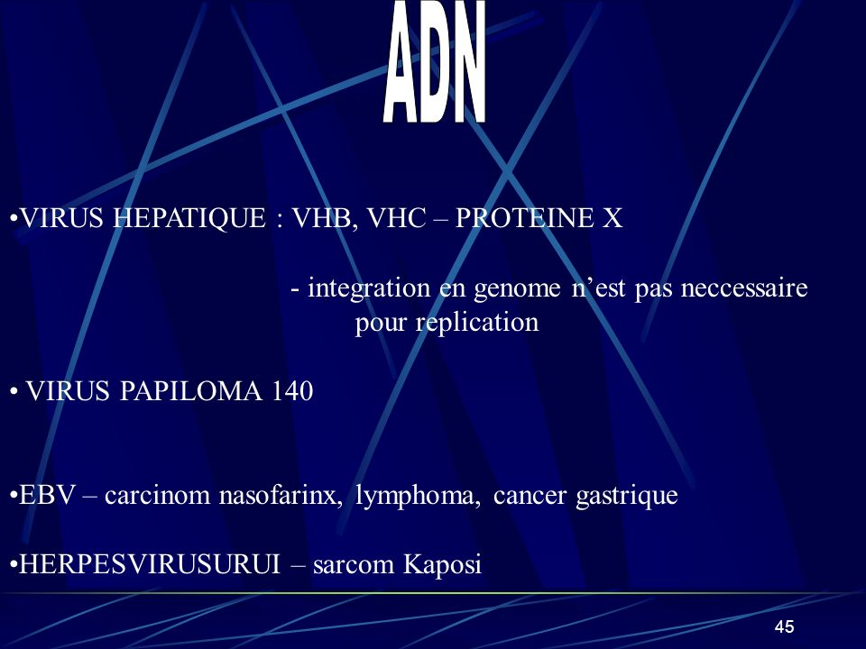 45 VIRUS HEPATIQUE : VHB, VHC – PROTEINE X - integration en genome nest pas neccessaire pour replication VIRUS PAPILOMA 140 EBV – carcinom nasofarinx,