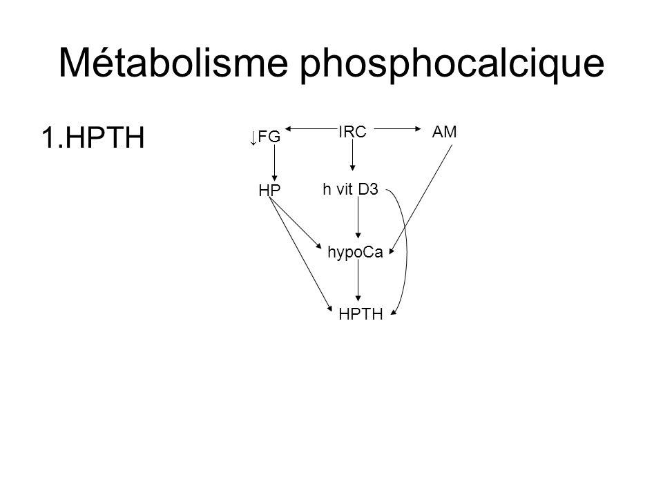 Métabolisme phosphocalcique 1.HPTH hypoCa h vit D3 HP FG IRC HPTH AM