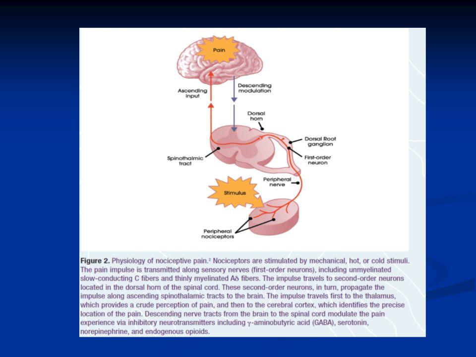 Données anatomo-physiologiques ayant des implications cliniques Les messages sensitifs sont codés dès la périphérie par lactivation de récepteurs de natures différentes (terminaisons différenciées ou libres) et véhiculés par Les messages sensitifs sont codés dès la périphérie par lactivation de récepteurs de natures différentes (terminaisons différenciées ou libres) et véhiculés par des fibres rapides, myélinisées, de gros calibre (sensibilités tactile et proprioceptive) ou des fibres rapides, myélinisées, de gros calibre (sensibilités tactile et proprioceptive) ou par des fibres fines, plus lentes, myélinisées ou non (sensibilités thermique et « douloureuse »).