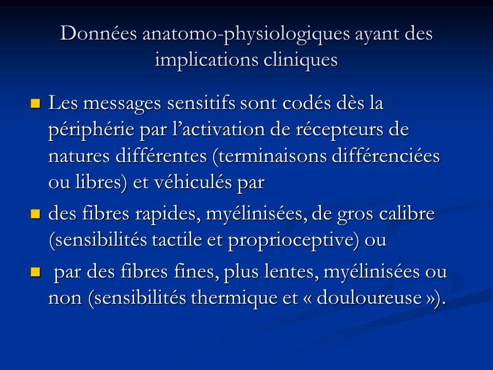 Les rameaux nerveux sous- cutanés sont purement sensitifs, mais les troncs nerveux plus profonds sont mixtes (associés aux fibres motrices efférentes).