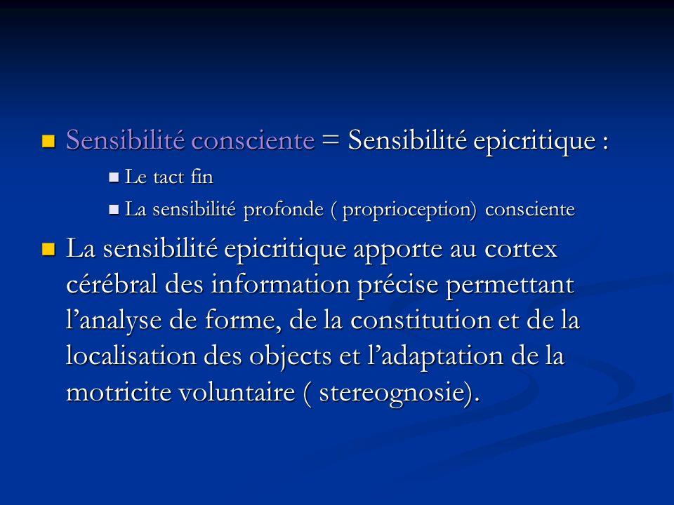 La motricite Plusieurs fonctions: déplacement « motilité » : concerne lensemble de la musculature.