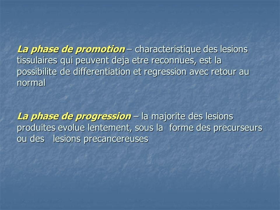 La phase de promotion – characteristique des lesions tissulaires qui peuvent deja etre reconnues, est la possibilite de differentiation et regression