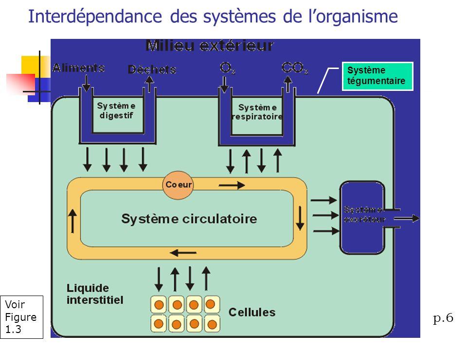 Voir Figure 1.3 Interdépendance des systèmes de lorganisme Système tégumentaire p.6