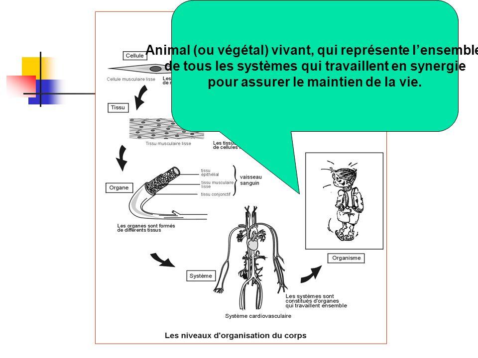 Animal (ou végétal) vivant, qui représente lensemble de tous les systèmes qui travaillent en synergie pour assurer le maintien de la vie.