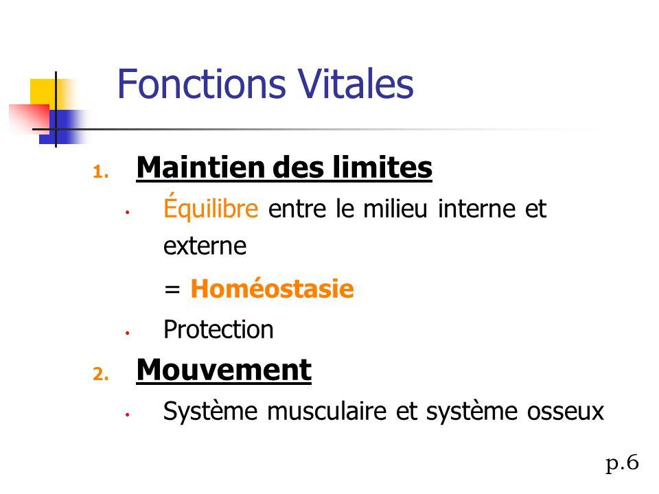 Fonctions Vitales 1. Maintien des limites Équilibre entre le milieu interne et externe = Homéostasie Protection 2. Mouvement Système musculaire et sys