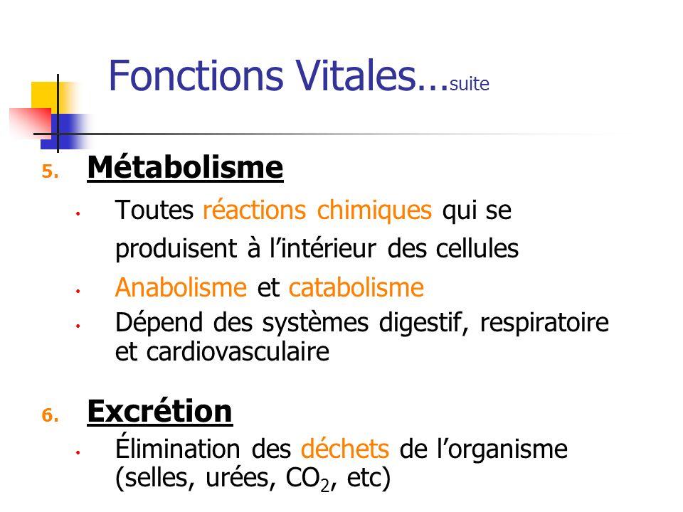 Fonctions Vitales… suite 5. Métabolisme Toutes réactions chimiques qui se produisent à lintérieur des cellules Anabolisme et catabolisme Dépend des sy