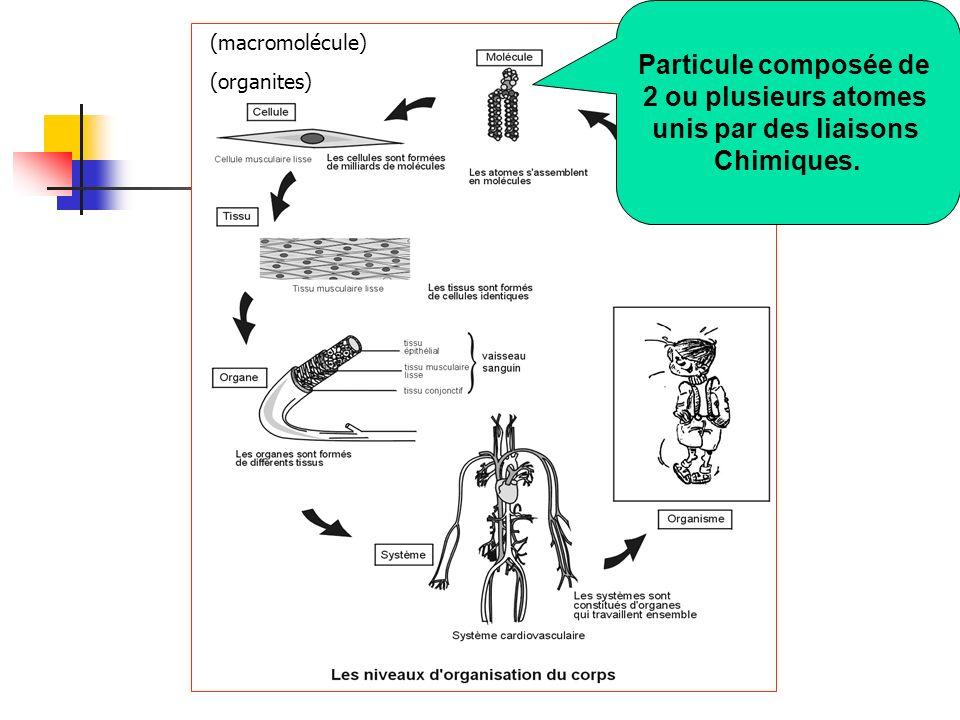 Particule composée de 2 ou plusieurs atomes unis par des liaisons Chimiques. (macromolécule) (organites)