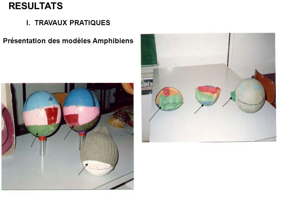 RESULTATS I. TRAVAUX PRATIQUES Présentation des modèles Amphibiens