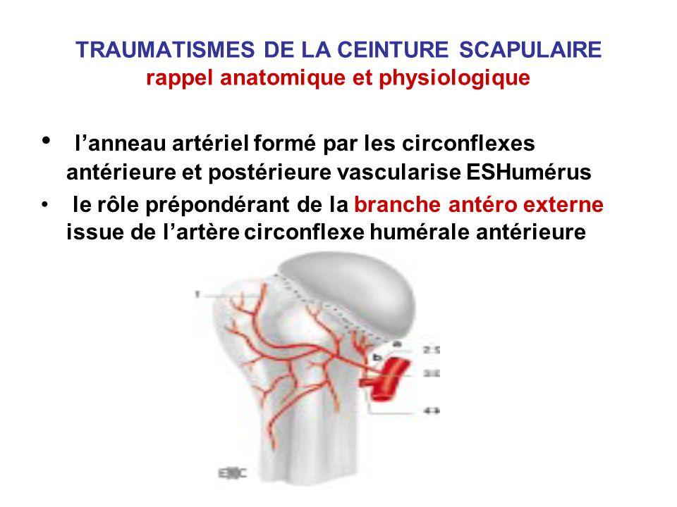 lanneau artériel formé par les circonflexes antérieure et postérieure vascularise ESHumérus le rôle prépondérant de la branche antéro externe issue de
