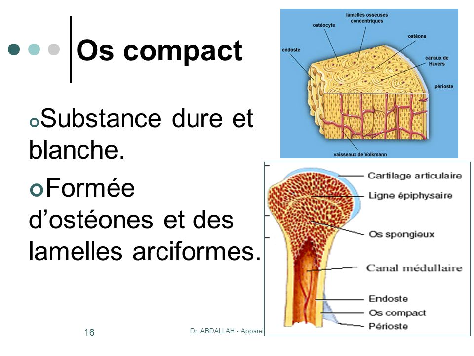 20/10/2007Dr. ABDALLAH - Appareil locomoteur 16 Os compact Substance dure et blanche. Formée dostéones et des lamelles arciformes.