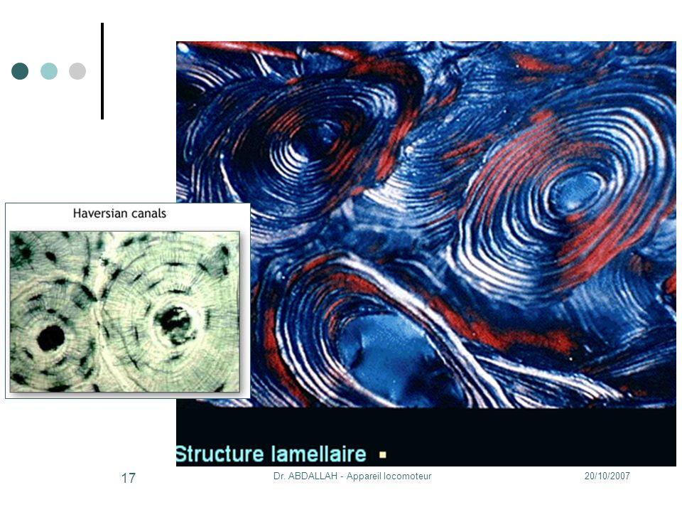 20/10/2007Dr. ABDALLAH - Appareil locomoteur 17