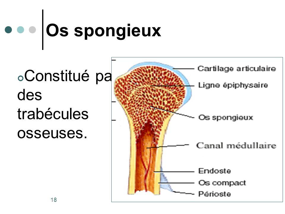 20/10/2007Dr. ABDALLAH - Appareil locomoteur 18 Os spongieux Constitué par des trabécules osseuses.