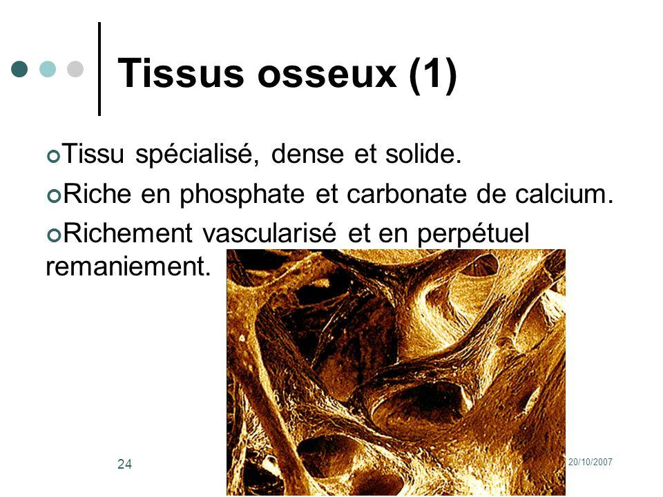 20/10/2007Dr. ABDALLAH - Appareil locomoteur 24 Tissus osseux (1) Tissu spécialisé, dense et solide. Riche en phosphate et carbonate de calcium. Riche