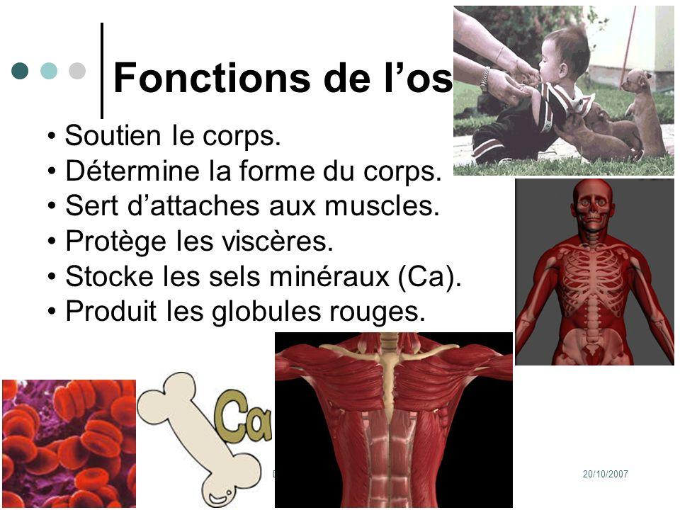 20/10/2007Dr. ABDALLAH - Appareil locomoteur 6 Fonctions de los Soutien le corps. Détermine la forme du corps. Sert dattaches aux muscles. Protège les