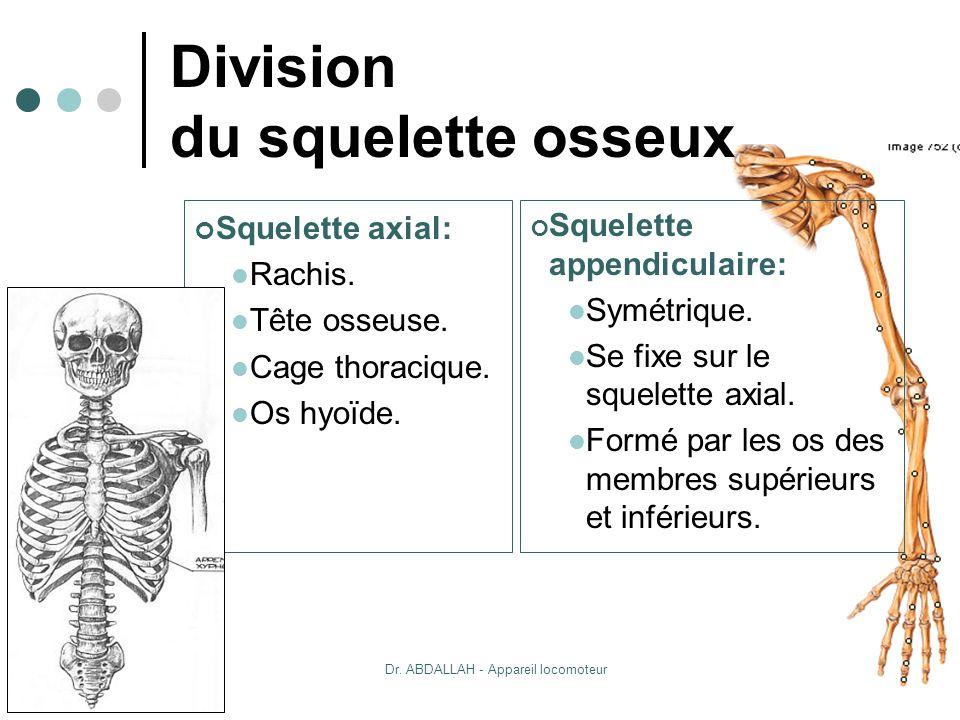 20/10/2007Dr. ABDALLAH - Appareil locomoteur 7 Division du squelette osseux Squelette axial: Rachis. Tête osseuse. Cage thoracique. Os hyoïde. Squelet