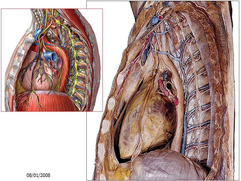 08/01/2008 Dr. ABDALLAH - Appareil circulatoire16