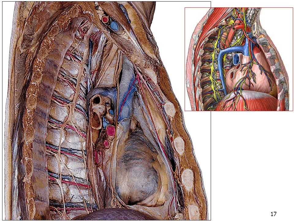 08/01/2008 Dr. ABDALLAH - Appareil circulatoire17