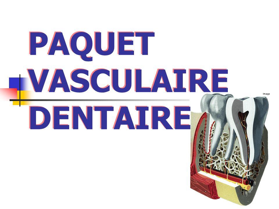 PAQUET VASCULAIRE DENTAIRE