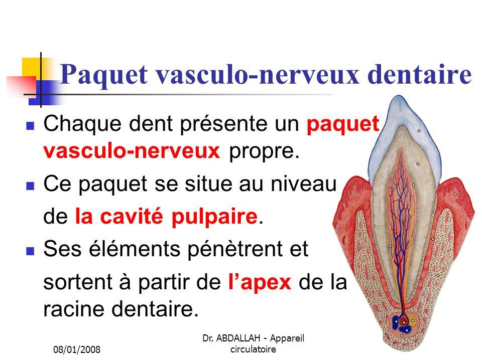 08/01/2008 Dr. ABDALLAH - Appareil circulatoire19 Paquet vasculo-nerveux dentaire Chaque dent présente un paquet vasculo-nerveux propre. Ce paquet se