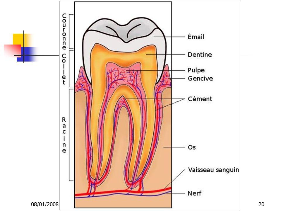 08/01/2008 Dr. ABDALLAH - Appareil circulatoire20
